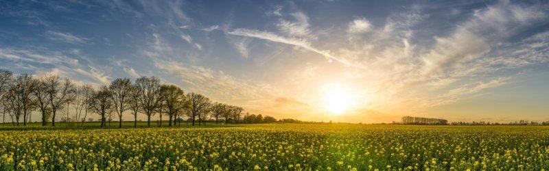 voorjaar-zuiver
